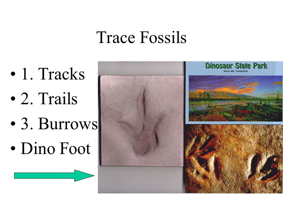 Trace Fossils 1. Tracks 2. Trails 3. Burrows Dino Foot