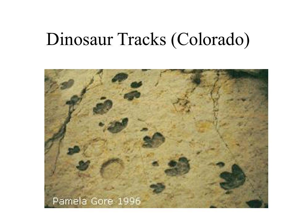 Dinosaur Tracks (Colorado)