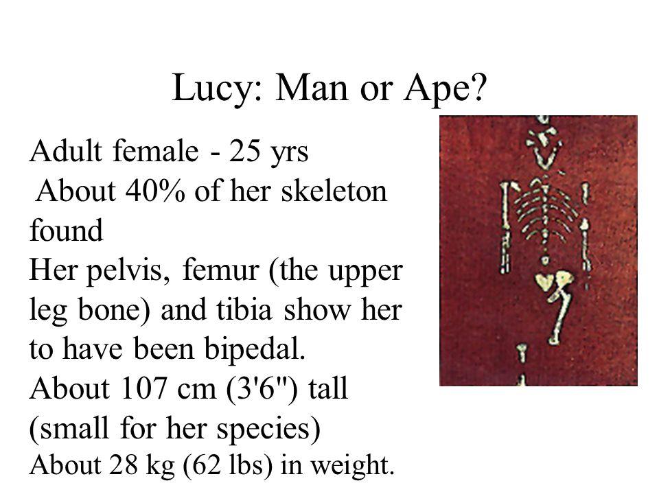 Lucy: Man or Ape Adult female - 25 yrs