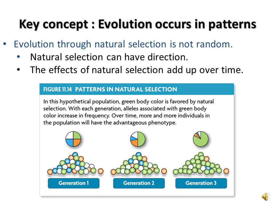 Key concept : Evolution occurs in patterns