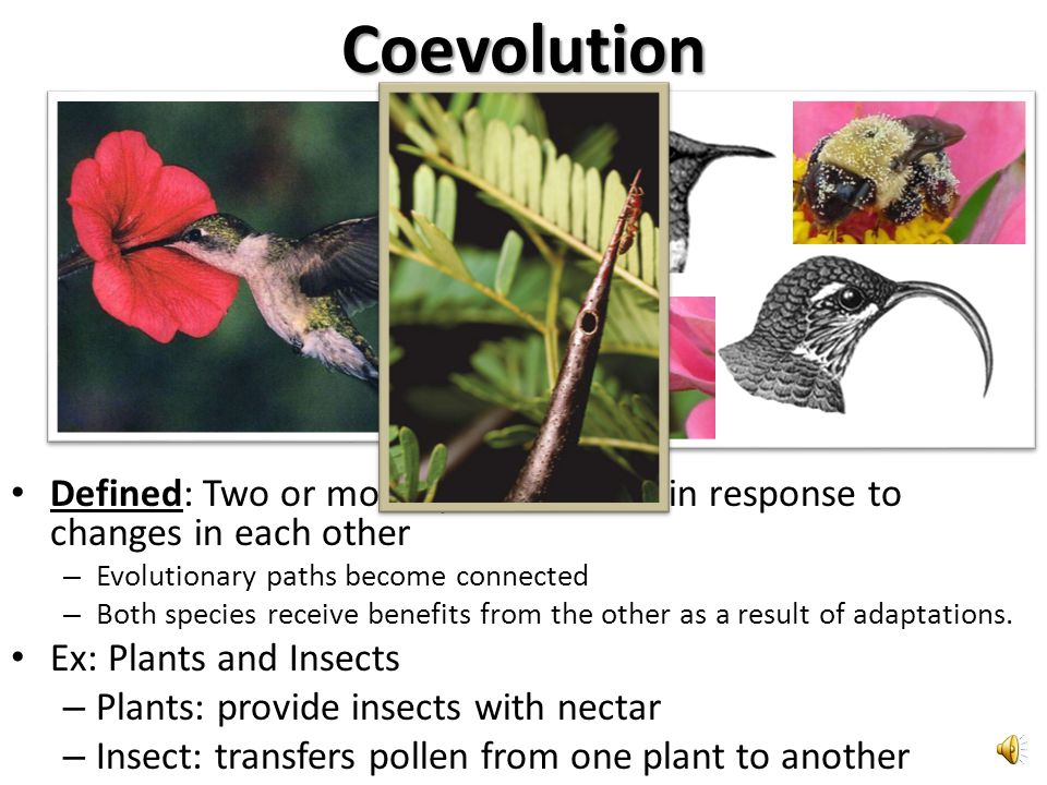Coevolution Defined: Two or more species evolve in response to changes in each other. Evolutionary paths become connected.