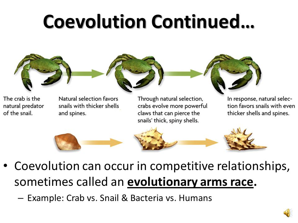 Coevolution Continued…