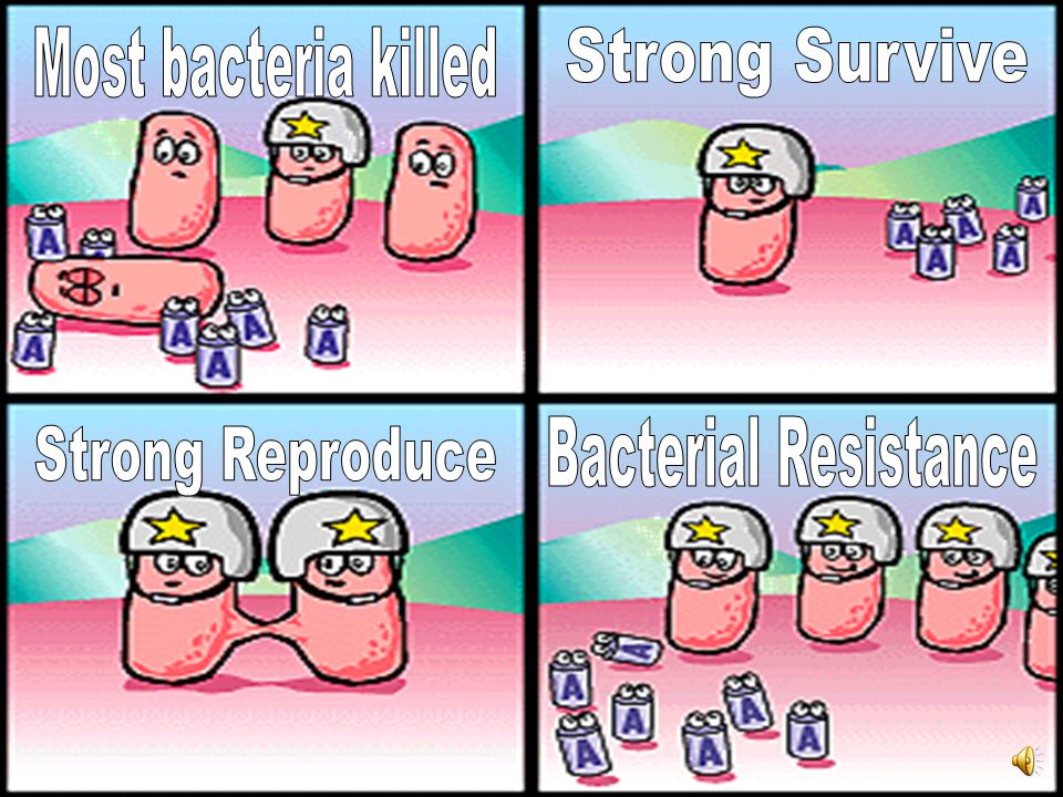 Most bacteria killed Strong Survive Bacterial Resistance Strong Reproduce
