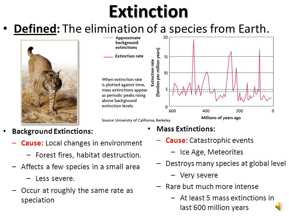 Extinction Defined: The elimination of a species from Earth.