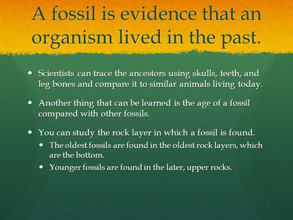 A fossil is evidence that an organism lived in the past.