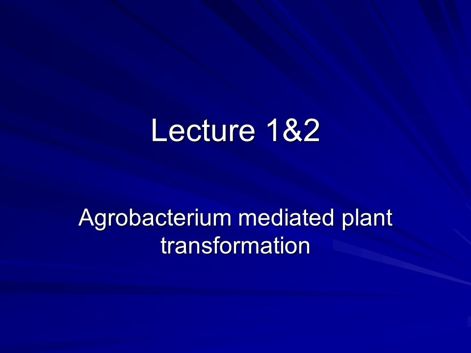 Agrobacterium mediated plant transformation