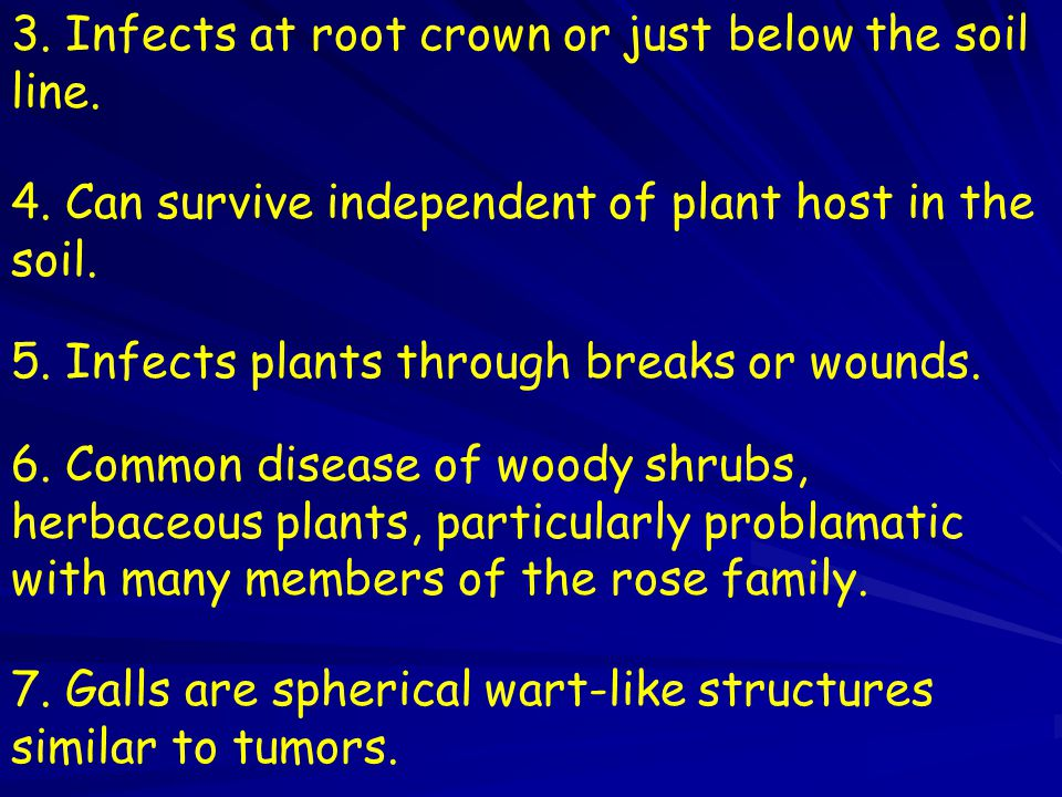 3. Infects at root crown or just below the soil line.