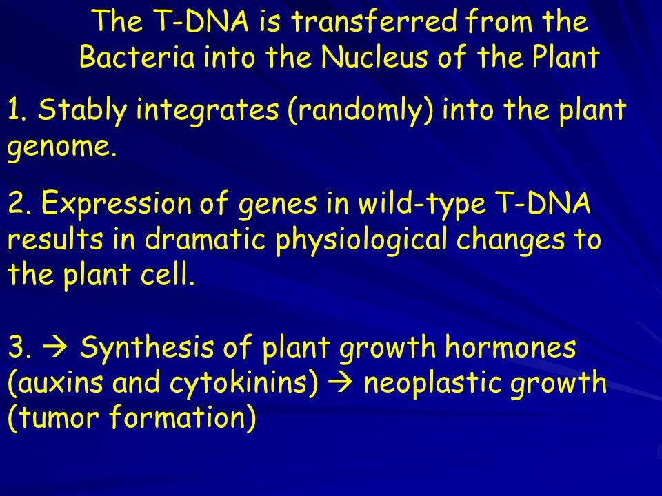The T-DNA is transferred from the Bacteria into the Nucleus of the Plant