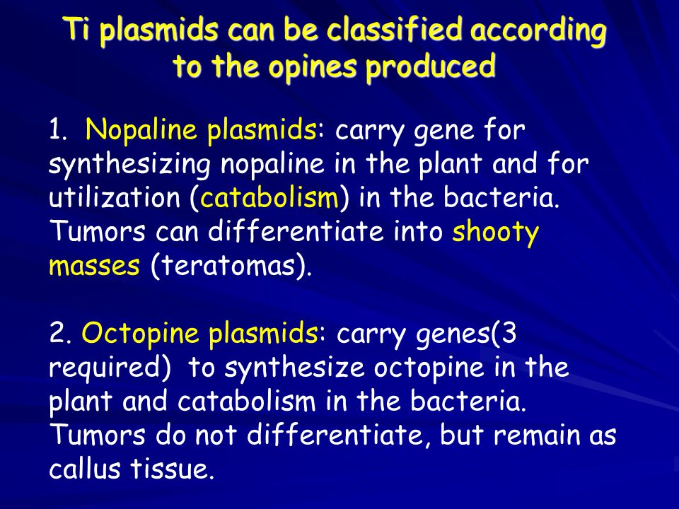 Ti plasmids can be classified according to the opines produced
