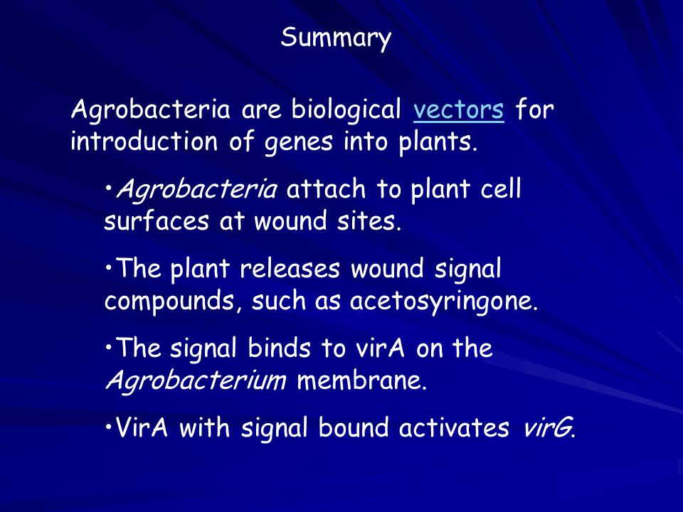 Agrobacteria attach to plant cell surfaces at wound sites.