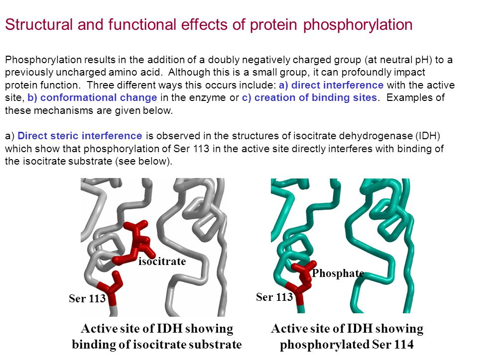 Structural and functional effects of protein phosphorylation