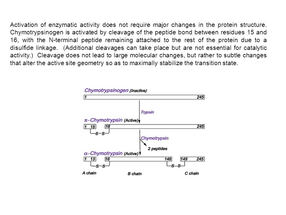 Activation of enzymatic activity does not require major changes in the protein structure.
