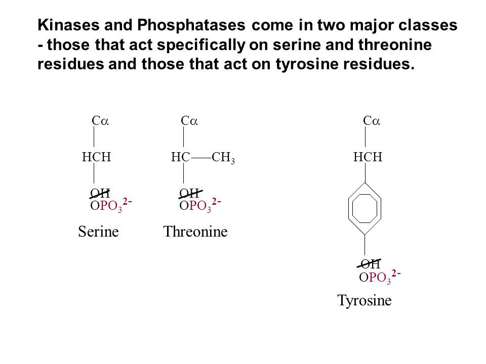 Kinases and Phosphatases come in two major classes - those that act specifically on serine and threonine residues and those that act on tyrosine residues.