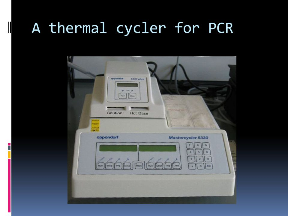 A thermal cycler for PCR