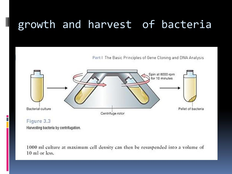 growth and harvest of bacteria