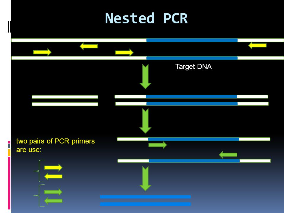 Nested PCR Target DNA two pairs of PCR primers are use: