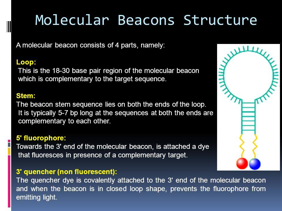 Molecular Beacons Structure