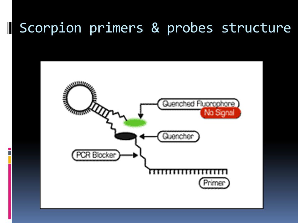 Scorpion primers & probes structure