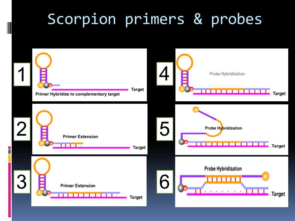 Scorpion primers & probes