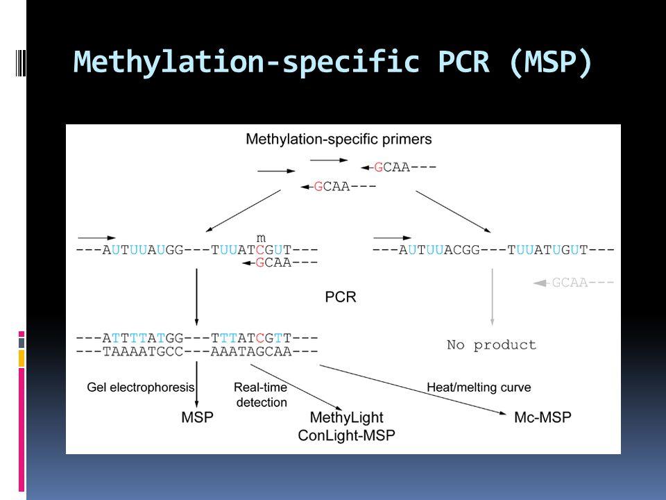 Methylation-specific PCR (MSP)