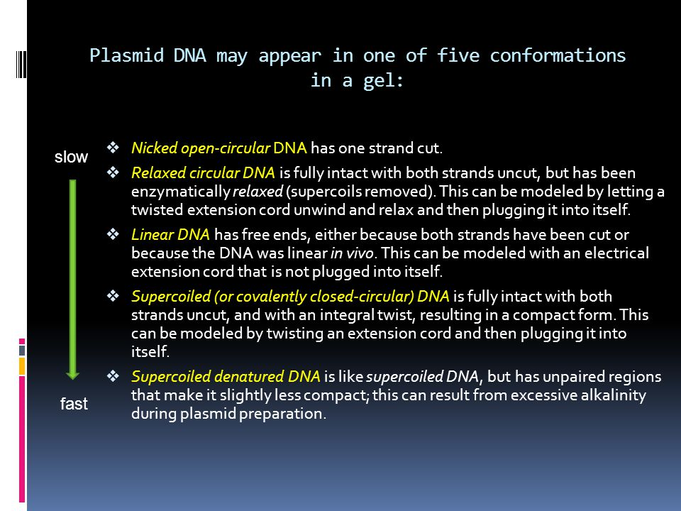 Plasmid DNA may appear in one of five conformations in a gel: