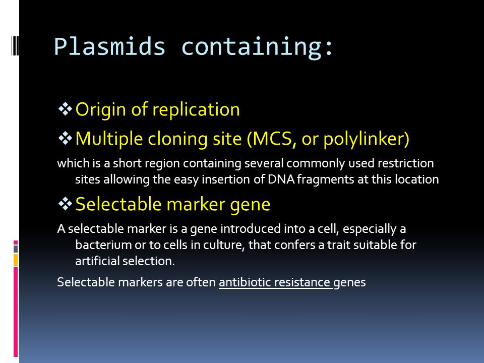 Plasmids containing: Origin of replication