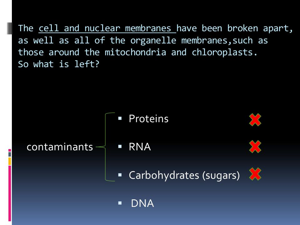 Carbohydrates (sugars) DNA contaminants