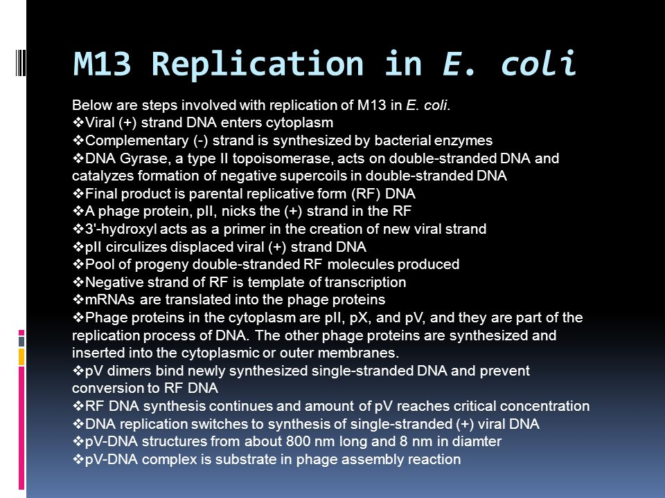 M13 Replication in E. coli Below are steps involved with replication of M13 in E. coli. Viral (+) strand DNA enters cytoplasm.
