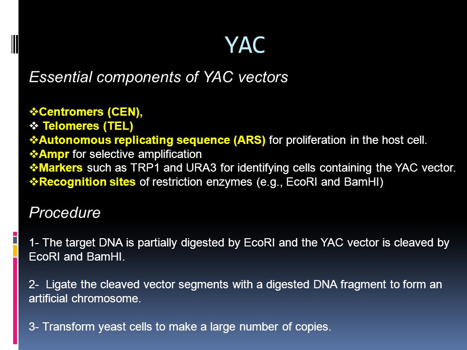 YAC Essential components of YAC vectors Procedure Centromers (CEN),