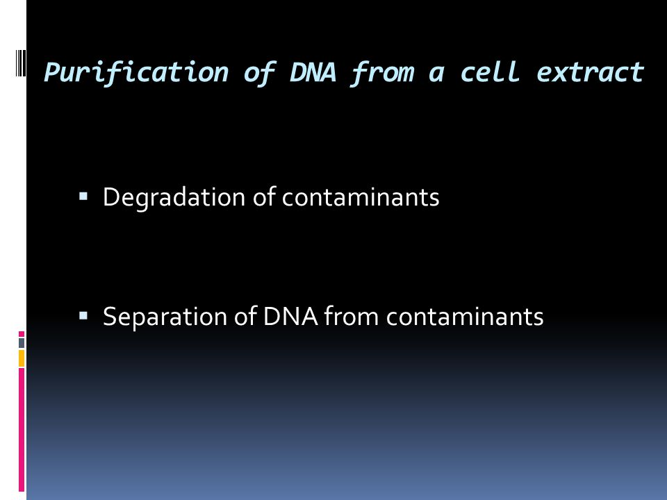 Purification of DNA from a cell extract