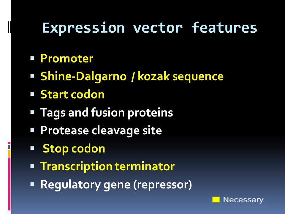 Expression vector features