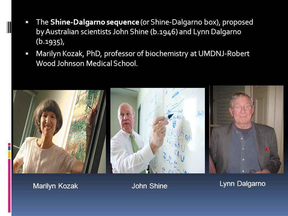 The Shine-Dalgarno sequence (or Shine-Dalgarno box), proposed by Australian scientists John Shine (b.1946) and Lynn Dalgarno (b.1935),