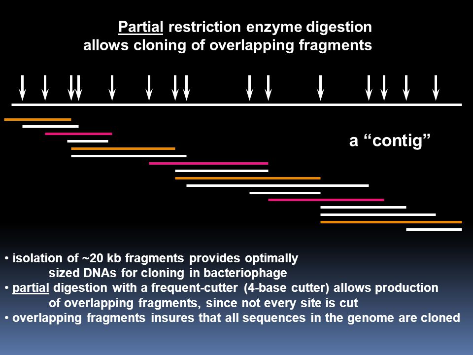 a contig Partial restriction enzyme digestion