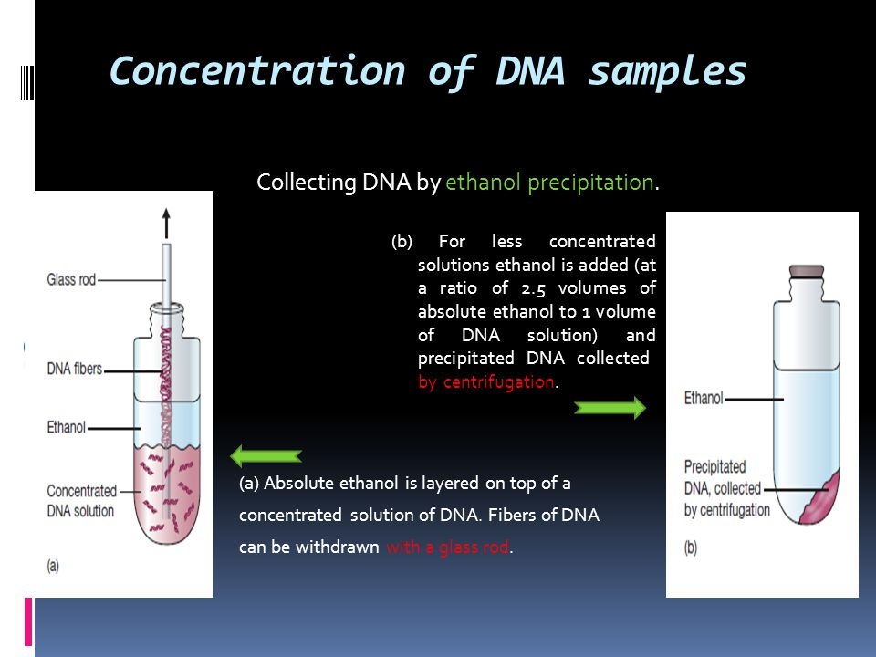 Concentration of DNA samples