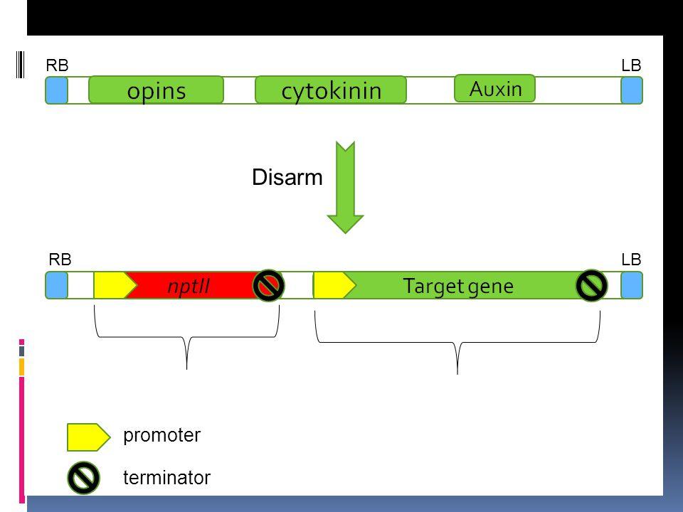 RB LB Disarm RB LB promoter terminator