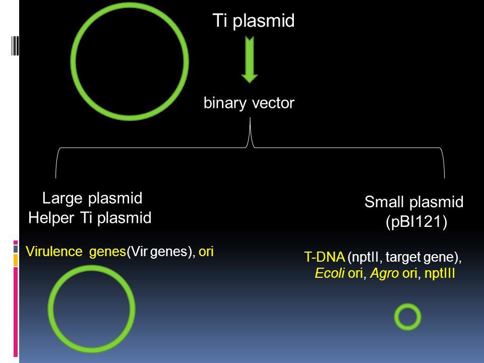 Ti plasmid binary vector Large plasmid Small plasmid Helper Ti plasmid