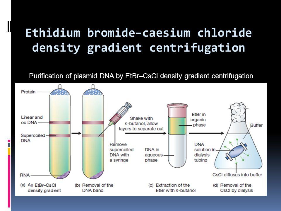 Ethidium bromide–caesium chloride density gradient centrifugation