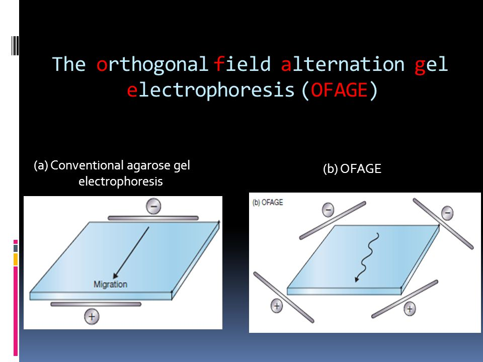 The orthogonal field alternation gel electrophoresis (OFAGE)