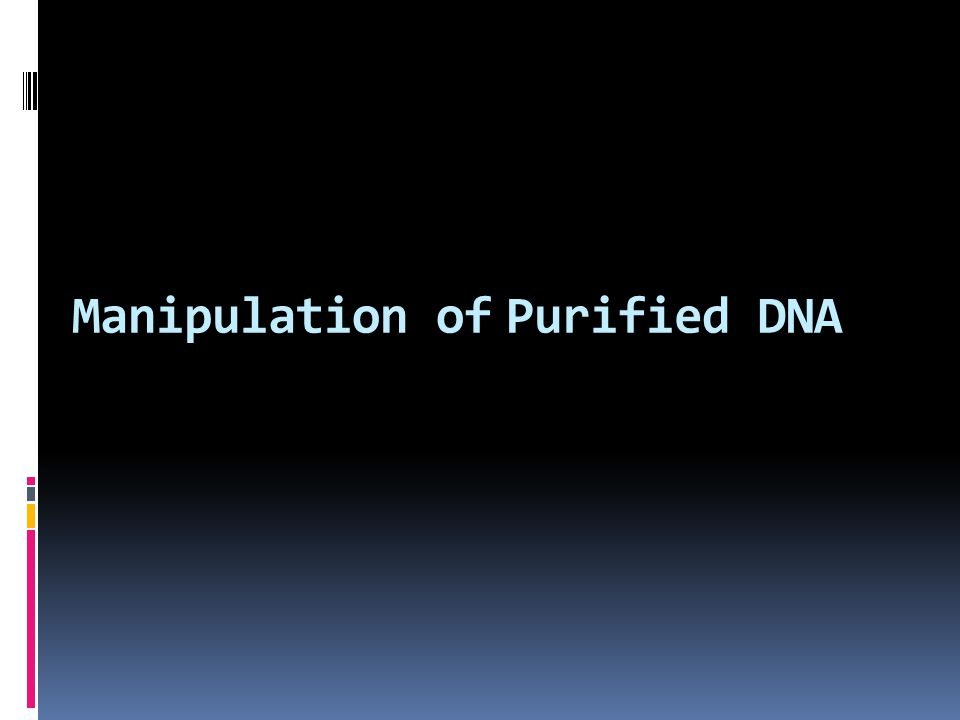 Manipulation of Purified DNA
