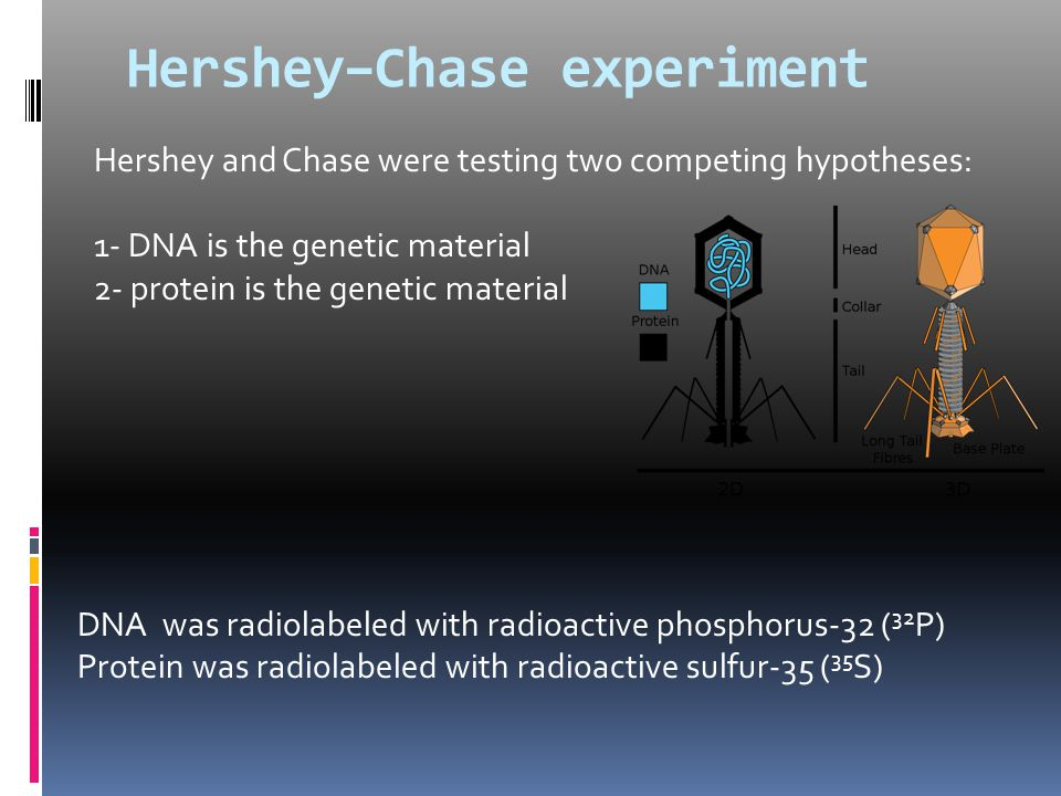 Hershey–Chase experiment