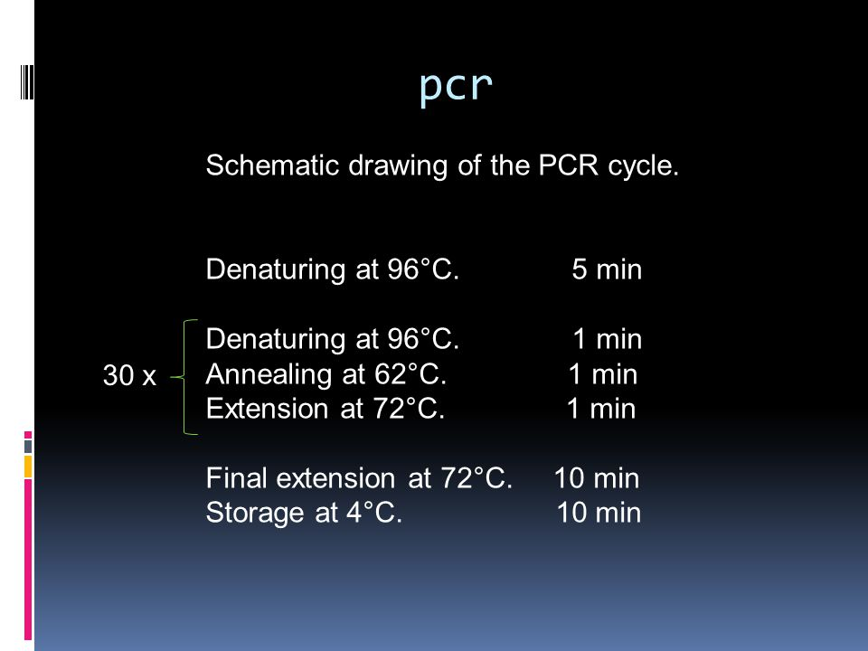 pcr Schematic drawing of the PCR cycle. Denaturing at 96°C. 5 min