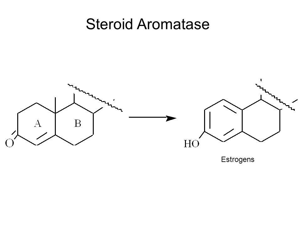 Steroid Aromatase Estrogens
