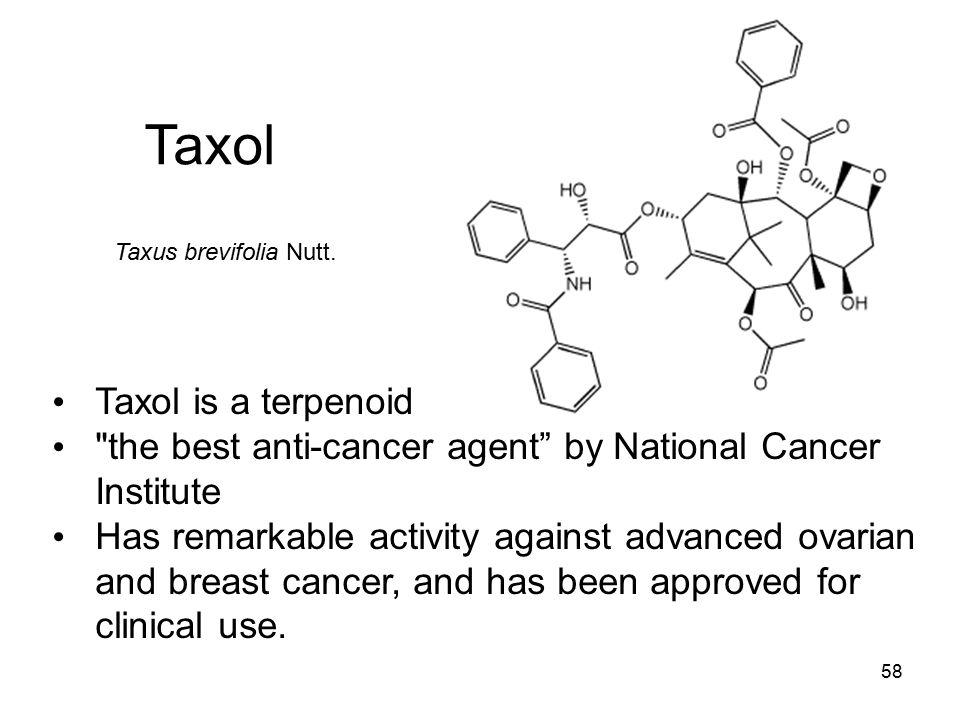 Taxol Taxol is a terpenoid