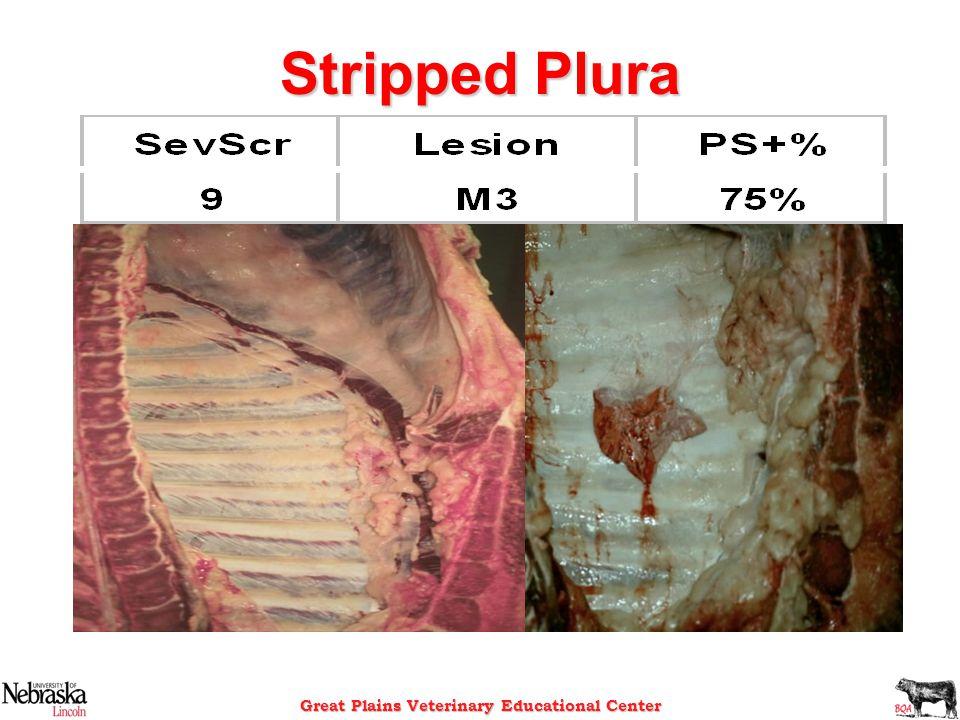 Stripped Plura