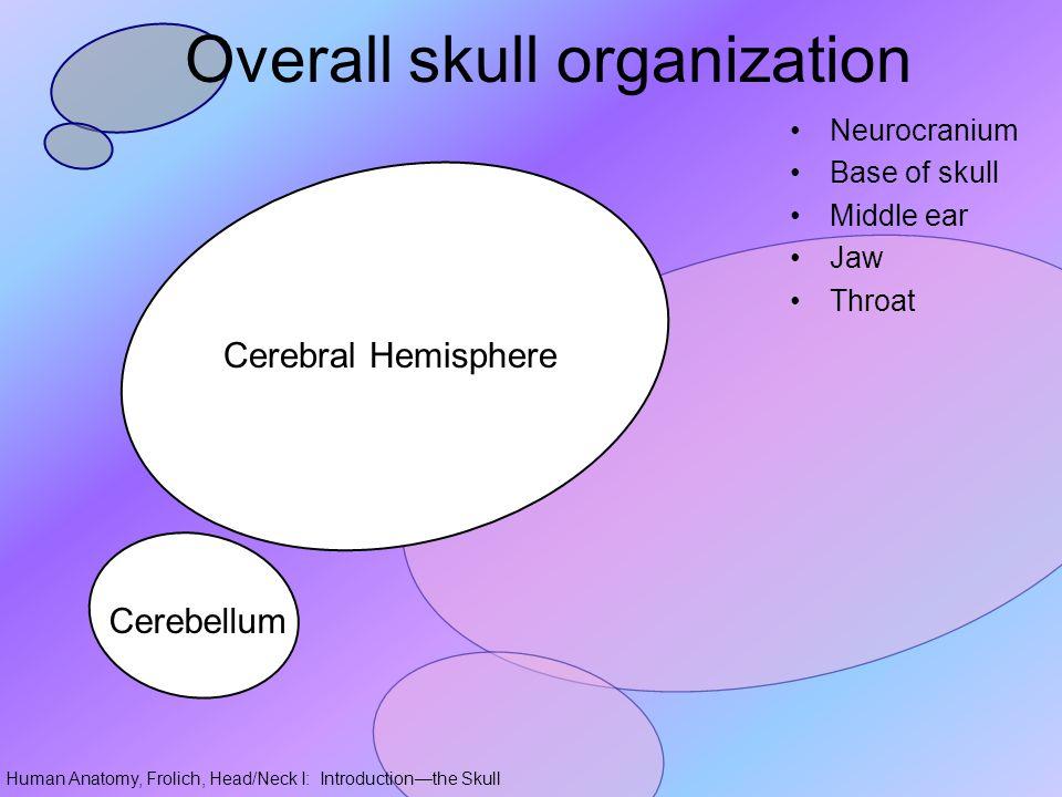 Overall skull organization