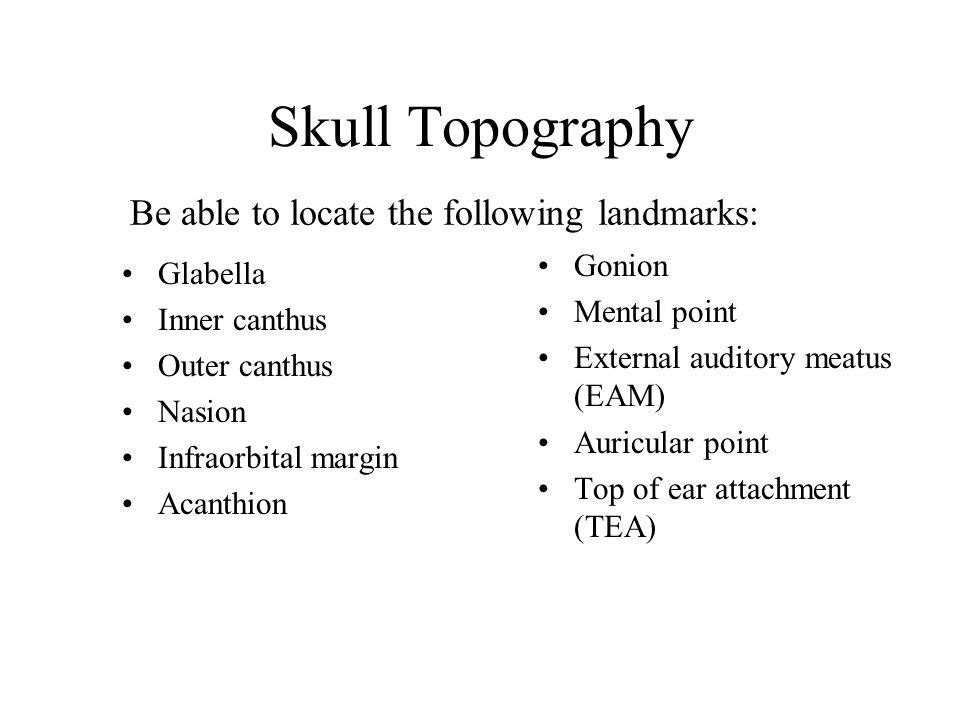 Skull Topography Be able to locate the following landmarks: Gonion