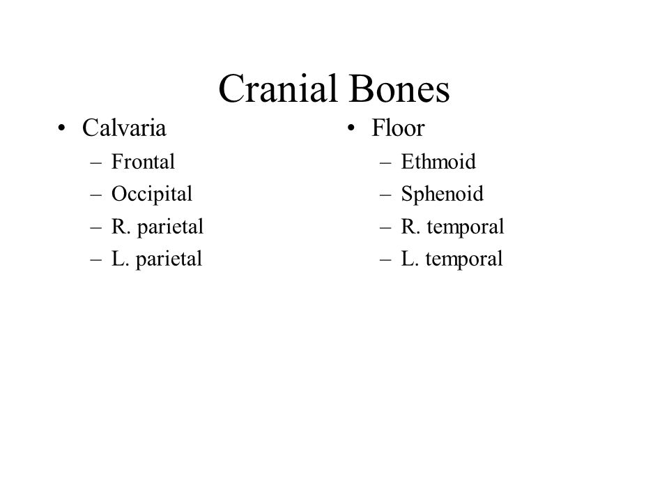 Cranial Bones Calvaria Floor Frontal Occipital R. parietal L. parietal