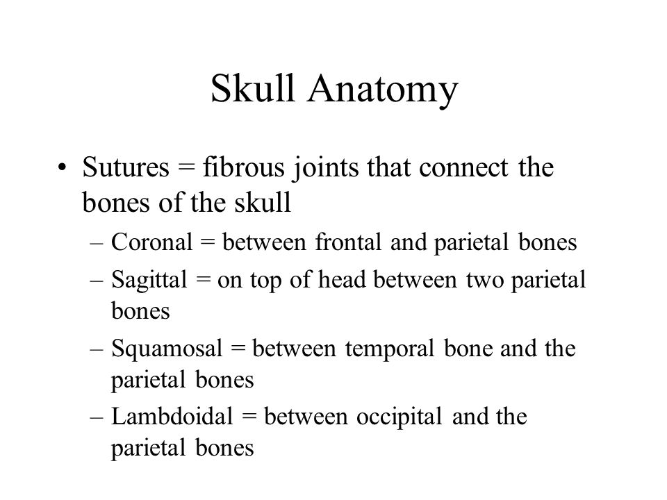 Skull Anatomy Sutures = fibrous joints that connect the bones of the skull. Coronal = between frontal and parietal bones.