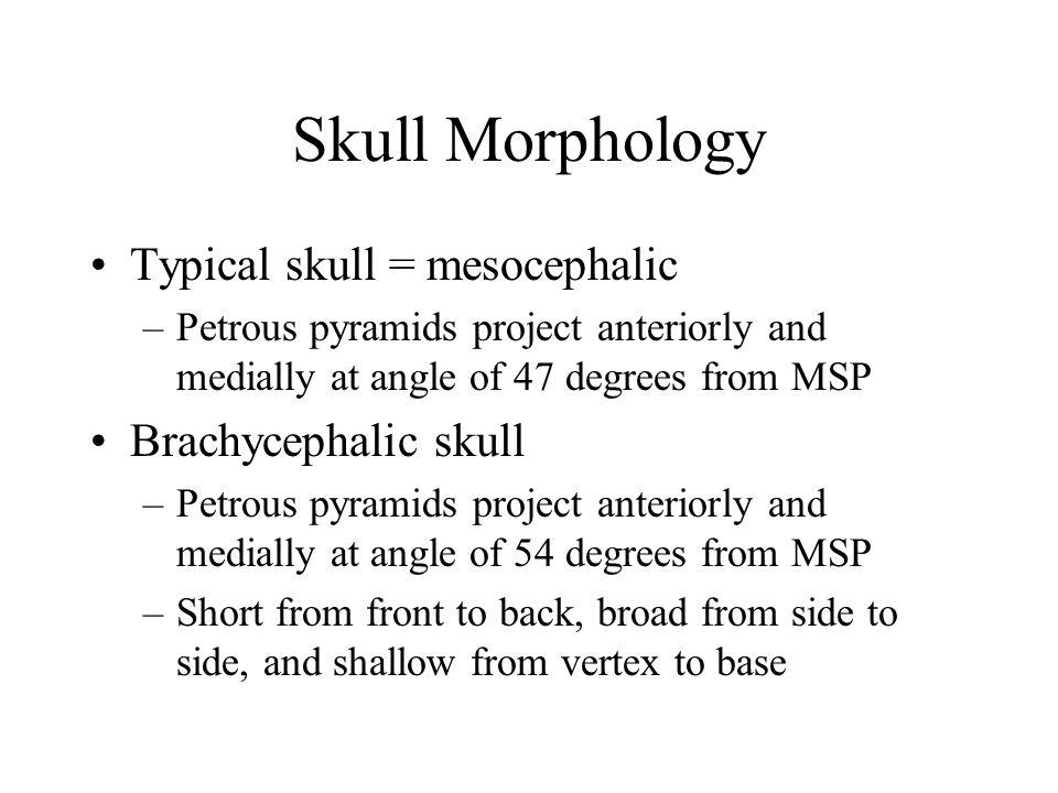 Skull Morphology Typical skull = mesocephalic Brachycephalic skull
