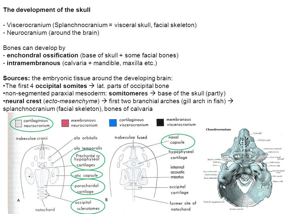 The development of the skull